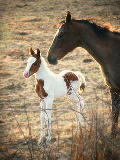 HorseSpring Colt Mare Newborn  Photo Print by barblassa on Etsy. Overo sorrel foal!!