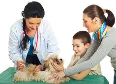 Ветеринар, вакцинация животных
