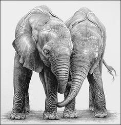 pencil drawings of elephants