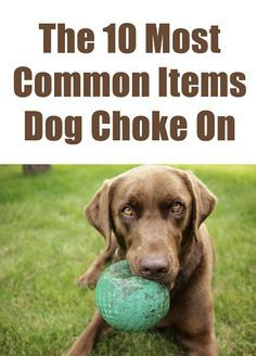 If you have a dog, you need to know these... http://theilovedogssite.com/10-most-common-items-dogs-choke-on/
