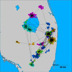 TOTD: Hwy 441 1 (Snail Kite) is 18 km W off the coast of United States and 31 km from Pompano Beach http://myd.as/t105404
