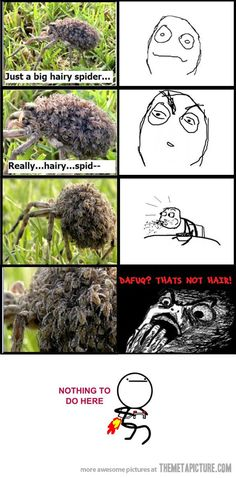 Funny pictures about Just a hairy spider. Oh, and cool pics about Just a hairy spider. Also, Just a hairy spider. Funny Quotes, Funny Memes, Hilarious, Creepy, Scary Bugs, Scary Spiders, Huge Spiders, Kill It With Fire, Lol