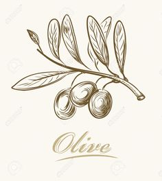 olives drawing - Buscar con Google Olive Tree, Pallet Projects, Digital Illustration, Olive Oil, Decoupage, Herbs, Illustrations, Drawings, Google