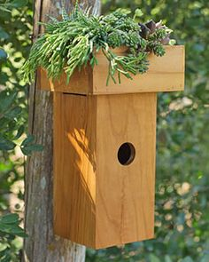"""With its rooftop planter, the Greenroof Teak Birdhouse has a 1-1/2"""" diameter entrance hole, suitable for bluebirds, Carolina wrens, tree swallows and hairy woodpeckers."""