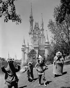 Vintage Walt Disney World: Robin Hood and Friends Visit Magic Kingdom Park