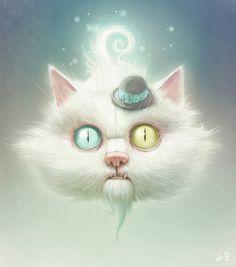 разноокий кот, интерн