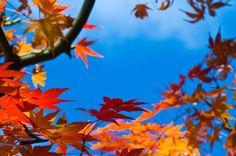 紅葉の無料写真