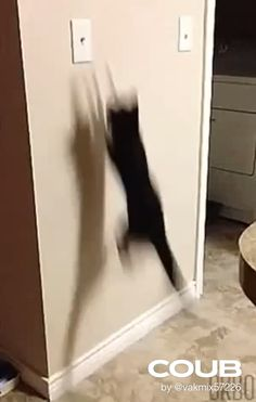 Funny Animal Pictures, Funny Animals, Cute Animals, Crazy Cat Lady, Crazy Cats, Gato Gif, Funny Cat Videos, Funny Cat Gif, Funny Animal Videos