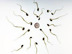Descubre el porqué de la infertilidad masculina #Salud