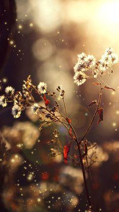 nature dandelion #iPhone #5s #Wallpaper