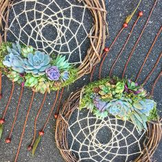 12 Living Succulent Dream Catcher Wreath made-to-order