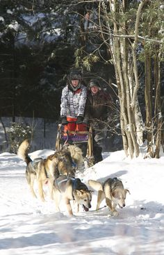 #Dog Sledding 2013  Like,Repin,Share, Thanks! Sled Dogs, Yukon Territory, Working People, Winter Sports, Adventure Awaits, Dogs And Puppies, Husky, Dog Cat, To Go