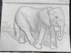 #illustration #ilustração #sketch #sketchbook #draw #drawing #desenho #elephant #elefante