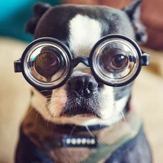5 Facts about dogs that will blow your mind ~ The Pet's Planet Frenchton Dog, Animals Photos, Funny Animal Photos, Funny Animals, Cute Animals, Dog Photos, Funny Photos, Funny Dogs, Cute Dogs