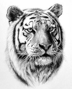 dessin en noir et blanc, tête de tigre, modèle - Zeichnungen_schwarz weis - Tattoo Tiger Drawing, Tiger Art, Tiger Sketch, Tiger Tiger, Animal Sketches, Animal Drawings, Pencil Drawings, Art Tigre, Tiger Tattoo Design