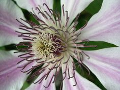 Breve descripción y visual rápida de las 38 Flores de Bach.