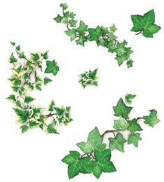 ¡Enséñanos el mueble que mejor has pintado! Decoupage, Clover Tattoos, Forest Tattoos, Ivy Plants, Flower Branch, Drawing Skills, Green Life, Art Sketchbook, Botanical Illustration