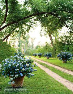 #Inspiratie #Hortensia #Hydrangea #Tuin #Decoratie #Mazzelshop