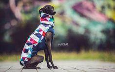 Italian Greyhound clothing #italiangreyhound #triangle #italiangreyhoundclothing #charcikwłoski #dogwear #dogclothes