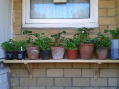 Early morning: herbs and strawbs growing on our West-facing (normally) sunny wall.