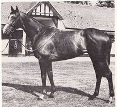 Indian Warrior(1973)Sing Sing- Intent By Vilmorin. 4x5 To Gainsborough, 5x5 To Phalaris. Solid Bloodlines That Stood His Entire Career In Australia.: