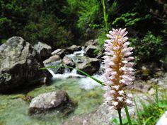 Wildflower Bloom In The High Tatras