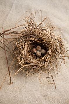 Nest. Nester, Egg Nest, Buy Birds, Australian Birds, Little Birdie, Bird Feathers, Beautiful Birds, Bird Houses, Easter Eggs