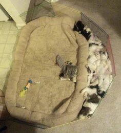 Maak je een mooi, zacht, warm bedje.... Krijg je dit! Eigenwijze puppies!!!