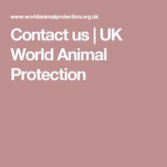 Contact us | UK World Animal Protection