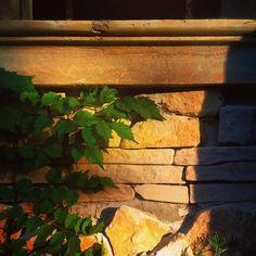#sun #sunset #summer #plants #stonemasonry #stonewall #wall #macro #sergepichii #detail #fragment
