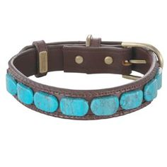 turquise! ... dog collar