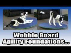 Agility Dog Training, Teeter Totter Training, foundation work with the wobble board Pam's Dog Academy www.pamsdogtraining.com Pamela Johnson, Dog Tricks and Dog Training too!