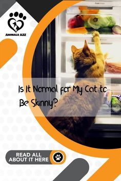 Do you find your cat very skinny? It's probably normal, but best to be sure. Read how to find out right now. Get more information at AnimalsA2Z.com. Information About Cats, Weight Loss Problems, Best Cat Food, Outdoor Cats, Eating Well, Cool Cats, Pet Care, Fun Facts, How To Find Out