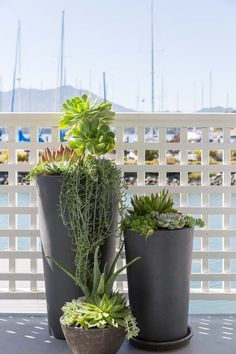 Sausalito Houseboat Exterior Coastal Transitional Cape Cod Garden Balcony by Nest Design Company Succulent Pots, Succulents, Sausalito Houseboat, Nest Design, Balcony Design, Top Interior Designers, Topiary, House Tours, Backyard