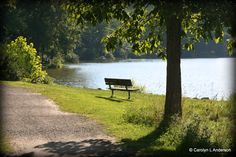 Park Bench with a view