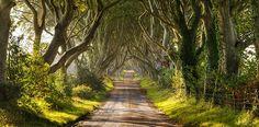 El mágico camino de Dark Hedges en Irlanda