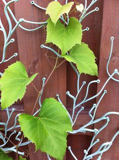 Grapevine on Vitra Algue trellis