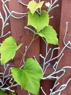 Grapevine on Vitra Algue trellis