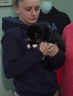 CARBON  6 years old, Male, Domestic short hair, Independent, Does appreciate affection