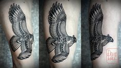 David Hale | Tattoo | Hawk