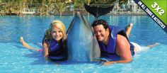 Dolphins experience.