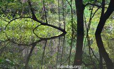Reflejos en las selvas colombianas... #Viajes Descubre la Colombia profunda con Mambe.org!