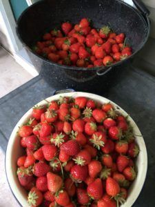 Strawberry Dream Cake, Strawberry Tarts, How to Store,Wash Freeze Berries