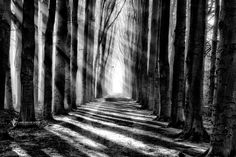 Photo Diagonalus par Lars van de Goor on Black N White Images, Black And White, Tree Faces, Home Photo, Travel Images, Light And Shadow, Lightroom Presets, My Images, Art Photography