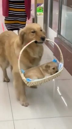 The cutest thing I'll see today. Dadda dog - Damn Doggyy - the cute dogs funny, silly dog. Silly Dogs, Cute Funny Dogs, Funny Cats And Dogs, Cute Dogs And Puppies, Cute Funny Animals, Funny Babies, Doggies, Dog Quotes Funny, Funny Animal Memes