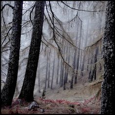 musicforthemorningafter-:    in the wood of the fairies | Flickr - Photo