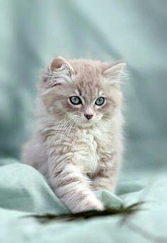 bestforpets cl, tu tienda online para mascotas ha seleccionado esta foto como best picture