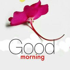 Good Morning Pictures 2018 In Hindi Punjabi English - Whatsapp Images Blessed Morning Quotes, Morning Quotes Images, Funny Good Morning Quotes, Good Morning Inspirational Quotes, Good Morning Messages, Good Morning Greetings, Morning Pictures, Beautiful Good Morning Wishes, Cute Good Night