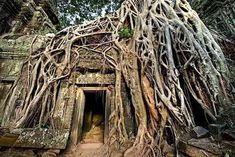 racines arbres sur temple cambodge