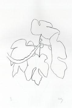 ellsworth kelly plant drawings - Google Search